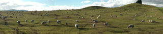 Sheep_Panorama_R
